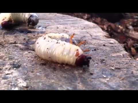 Tarli del legno - YouTube