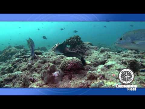 MV Virgo Constellation Fleet Maldives Dive Liveaboard