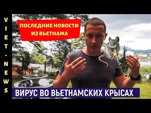 Новости Вьетнама: что происходит в Нячанге / когда откроют Вьетнам для русских туристов / VietNews#1