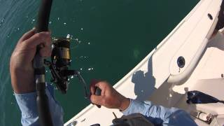 Jack Cravelle Atlantic Ocean huge fish and Spotted Sea Trout I caught by WillCFish Tips and Tricks.