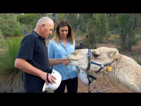 Destination WA - Calamunnda Camel Farm