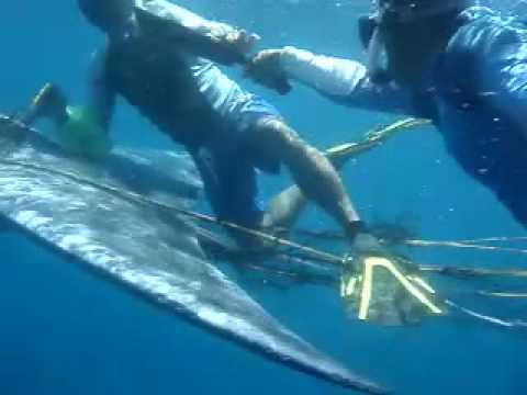 My Magical Ocean: Saving a Brydes Whale off Donsol, Sorsogon,  Philippines