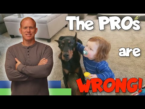 Raising a Doberman with Kids: The Experts are WRONG!