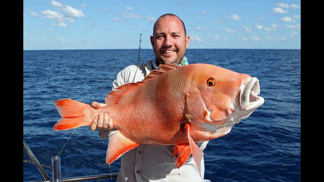 Great barrier reef mothershipping fishing charter part 1 for Private fishing charters nj