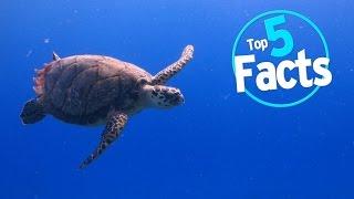 top-5-endangered-animal-facts