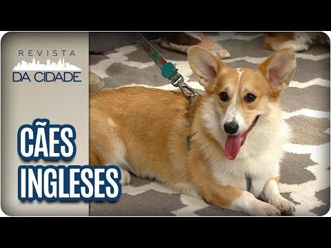 Saiba Tudo Sobre Raças De Cães Inglesas - Revista Da Cidade (09/02/18)
