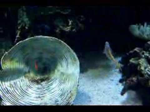 Aquarium Of The Pacific Sharks Jelly Fish Sea Horse