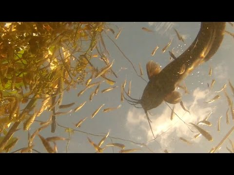 Everglades Canal Fish | GoPro Extended Rough