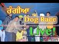 Rangian Greyhound Races (ਸ਼ਿਕਾਰੀ ਕੁੱਤਿਆਂ ਦੀਆਂ ਦੌੜਾਂ) 14-feb-2017 live by punjabilivetv.com