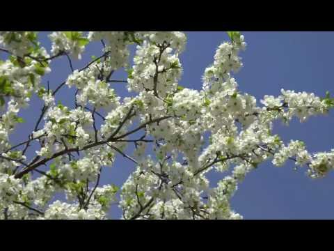 Весна-прекрасное время года!
