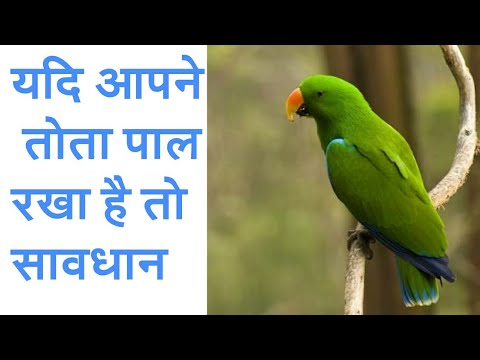 यदि आपने तोता पाल रखा है तो सावधान / If you have set a parrot then be careful