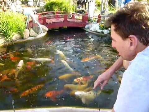 Bob and Bonnies Koi Pond