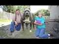 DOG BREED 5 Most Famous American Bully Breeders [Mr Fahey]
