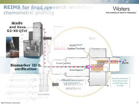 Rapid Evaporative Ionization Mass Spectrometry for Direct Food Analysis