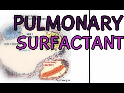 The Respiratory System: Pulmonary Surfactant