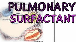 The Respiratory System: Pulmonary Surfactant