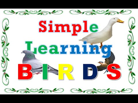Simple Learning for kids //Learn Birds Name with Picture & audio // Birds  name video for children