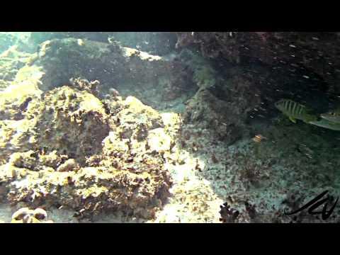 grand-palladium-riviera-maya-beach---youtube