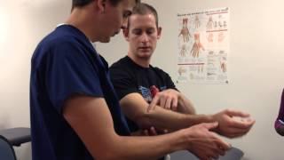 Kinesiology Palpation: Elbow & Forearm Bones 3
