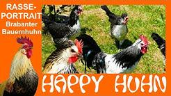 E146 Brabanter Bauernhühner im Rasseportrait bei HAPPY HUHN, Brabançonne Hühner Silber Wachtelfarbig
