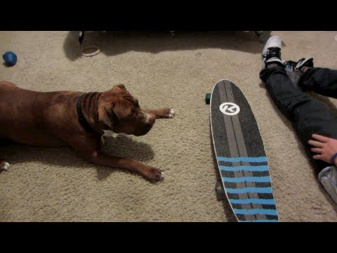 TEACH A DOG TO SKATEBOARD