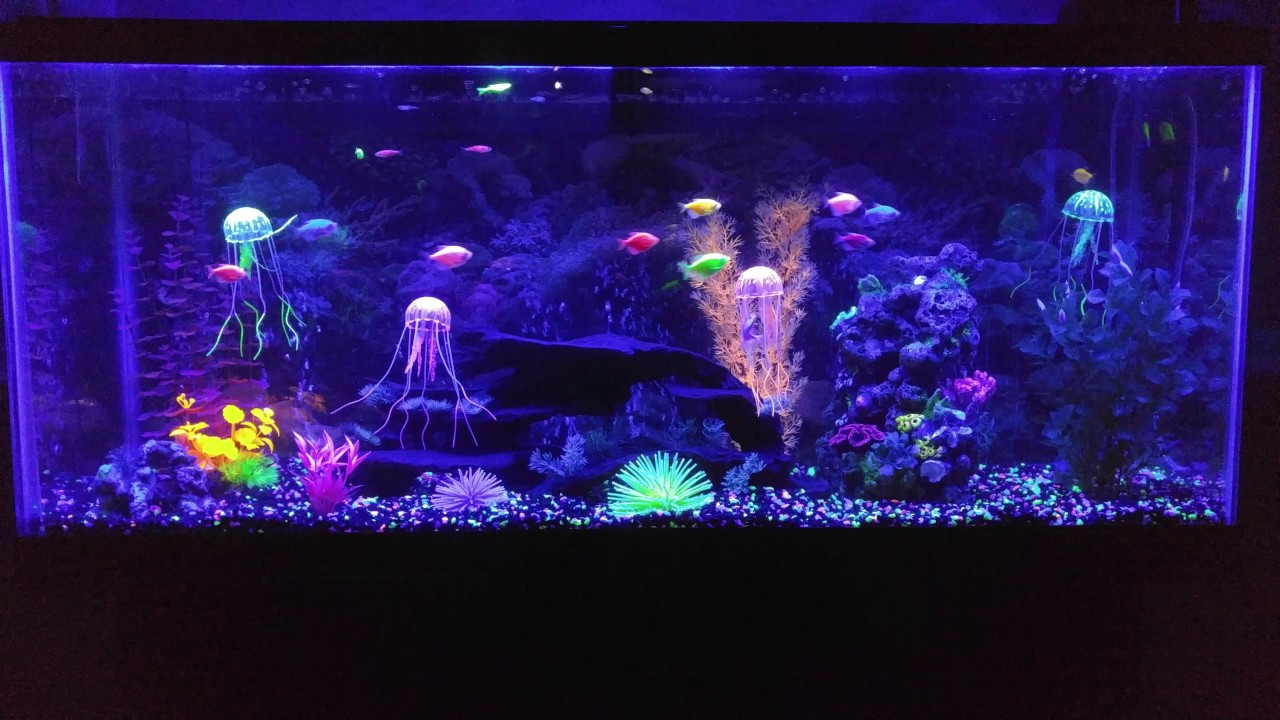 Image Result For Jellyfish Tank