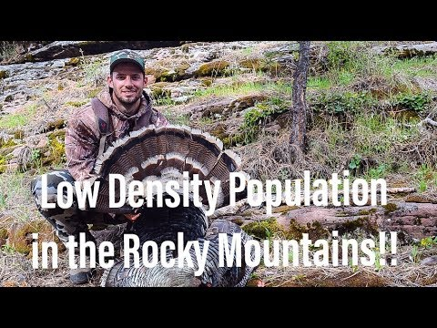 MOUNTAIN BIRDS - A Tough Utah PUBLIC LAND Turkey Hunt