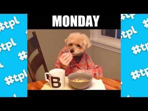 Your Week Told By Dogs | Funniest Dog Vines 2017 | #thatpetlife