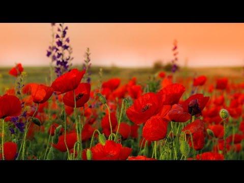 Цветы по оттенкам радуги. Растения красного цвета