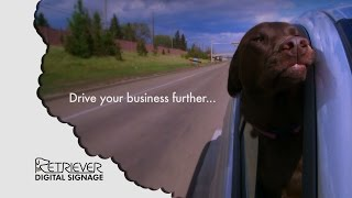 Digital Signage: Take Your Business Further Funny Dog Video