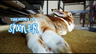ASMR The Story of My Bunny, Spooner