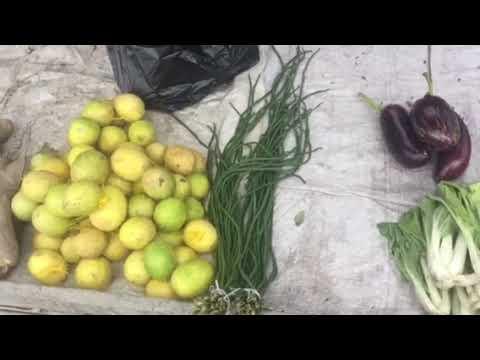 Organic greens /vegetables at Parika Market