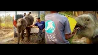 IFAW_Спасение животных