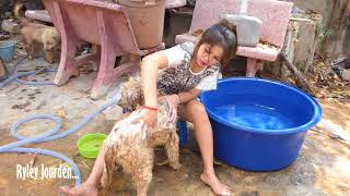 Beautiful girl giving her puppy a wash, amazing dog having a shower with a beautiful girl.