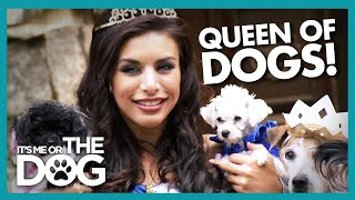 America's 'Royal Family' Needs Help With Their Dogs! |  It's Me or The Dog