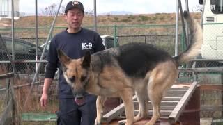 助けを待つ命のために 災害救助犬