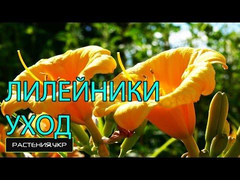 Первоцветы / многолетние цветы / примула уходиз YouTube · С высокой четкостью · Длительность: 3 мин21 с  · Просмотры: более 40.000 · отправлено: 05.02.2015 · кем отправлено: О РАСТЕНИЯХ