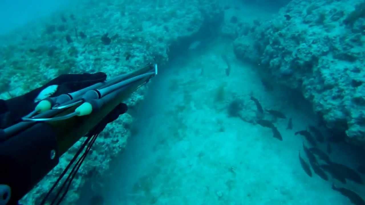 Scuba Dive On 240 Ledge, Fort Myers, FL