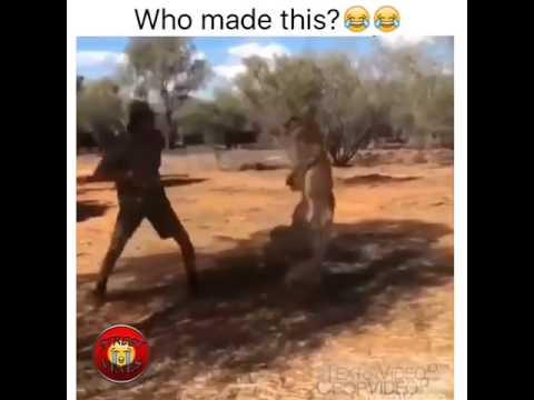 Badass kangaroo