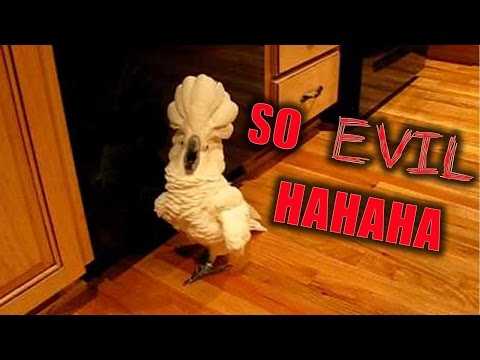 COCKATOO IMITATING HIS OWNER SUCH AN EVIL ''LAUGH'' - YOU CAN'T BELIEVE IT | FUNNY PET COMPILATION