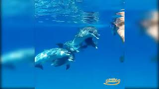 Such beautiful creatures 🐬 Dolphins