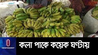 ক্ষতিকর রাসায়নিক ব্যবহারের অভিযোগ স্থানীয়দের ।। Meherpur Banana