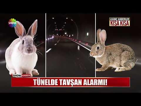 Tünelde tavşan alarmı!