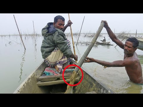 amazing !! unseen fish trapping system , bamboo fish trap - peacock eel;