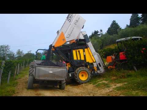 Grape harvest/ Vendemia alla Villa Poneta in Tuscany