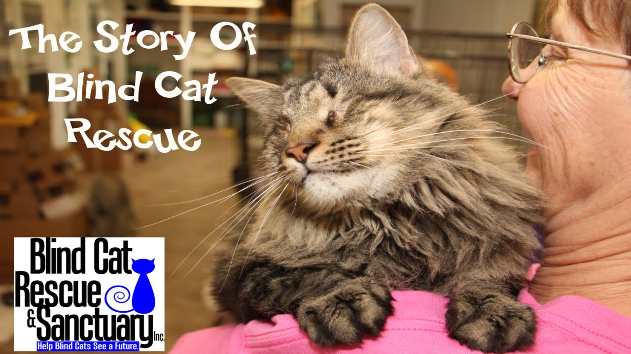 Blind Cat Rescue And Sanctuary Rating