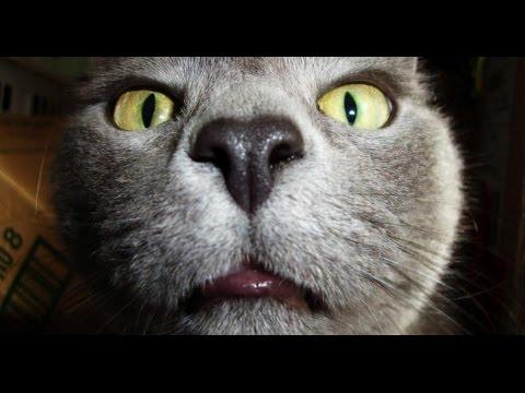 Смешное видео про кошек и собак