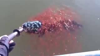 Необычная рыбалка ,а также рыба,это надо видеть!
