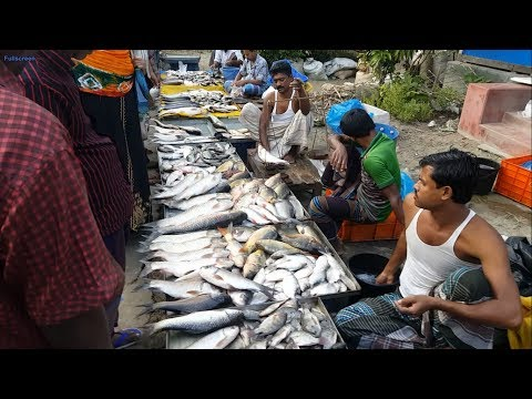 Amazing Rural Village Fish Market In Bangladesh | Lots Of Fresh Country Fishes Available