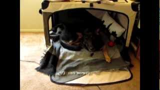 Shiloh's New Bed Crate Tent... Thingy!